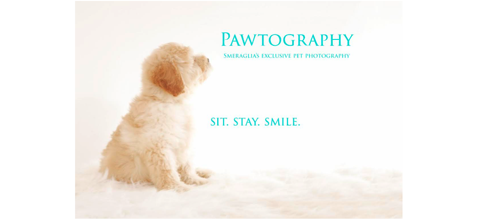 Capture your Schnoodle's Puppy Memories!